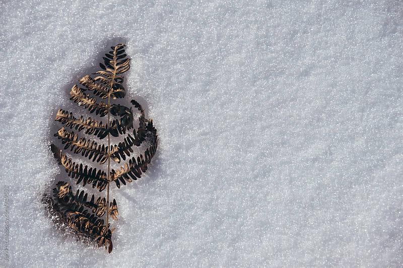 frozen leaf  by Juri Pozzi for Stocksy United