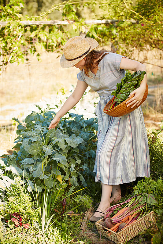 Woman farmer picking kale from her organic garden by Trinette Reed for Stocksy United