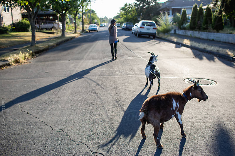 Two goats on a leash in the city by michela ravasio for Stocksy United