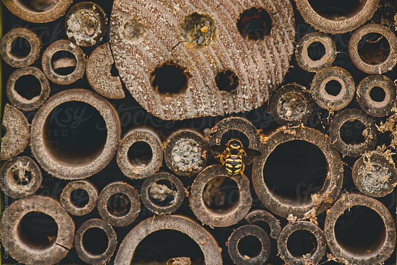 mason bee house by Courtney Rust for Stocksy United