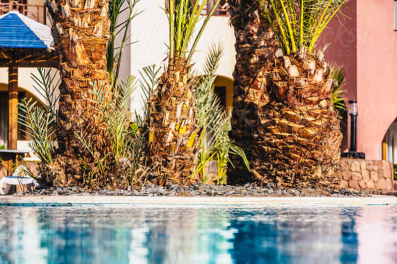 Tropical resort pool with palm trees by Ilya for Stocksy United