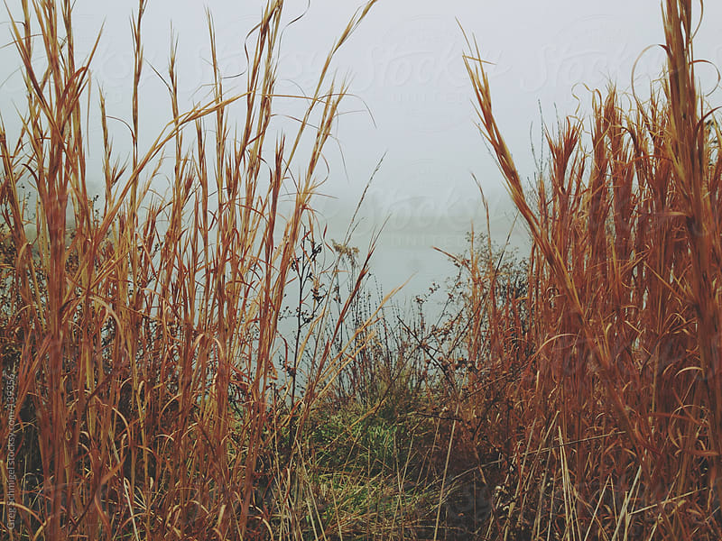 A view of mist and fog over a lake, through the reeds. by Greg Schmigel for Stocksy United