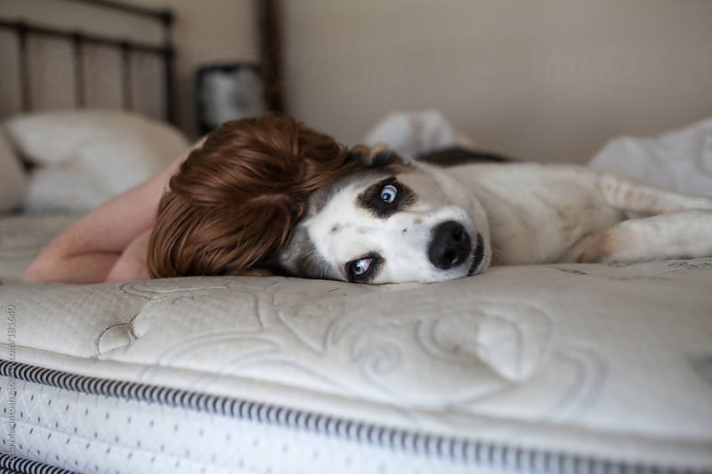 sleeping red haired boy with blue eyed dog on bed by Lisa MacIntosh for Stocksy United
