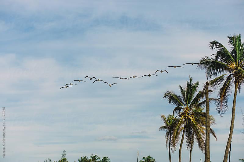Birds flying by Havana beach by Natasa Kukic for Stocksy United