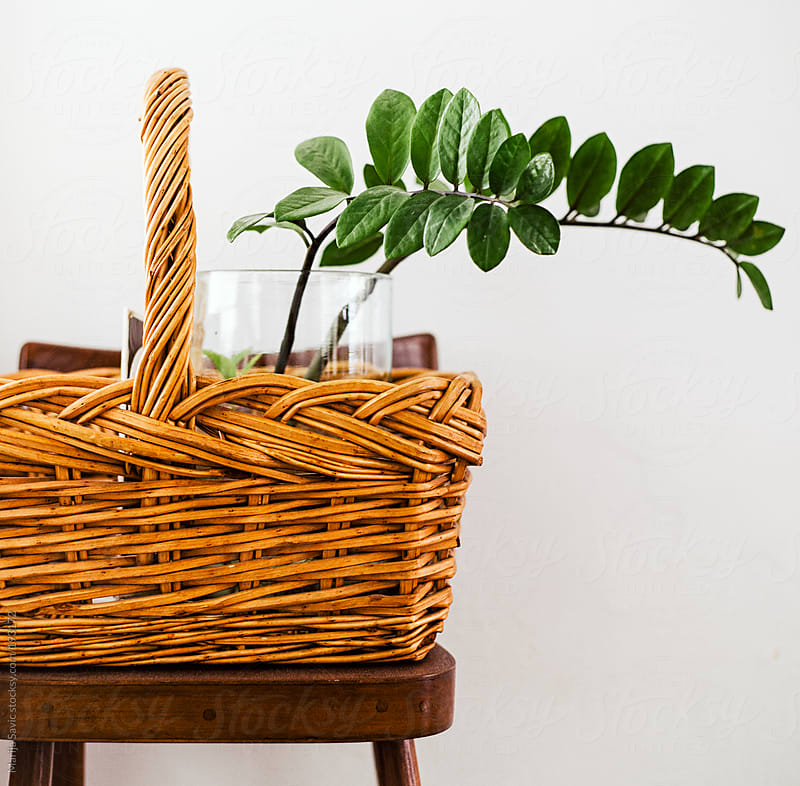 Plant Inside of Basket  by Marija Savic for Stocksy United