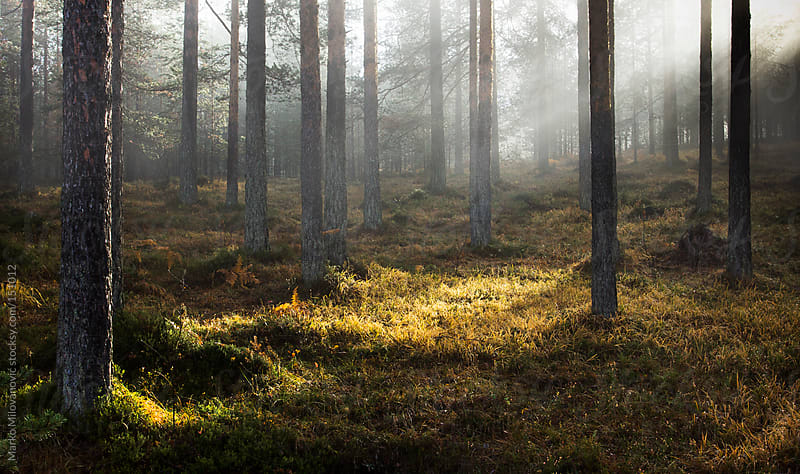 Magic forest sunrays by Marko Milovanović for Stocksy United