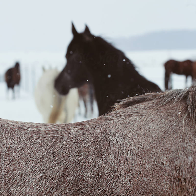 Close Up Of A Horse's Back With Several Horses In The Distance by ALICIA BOCK for Stocksy United