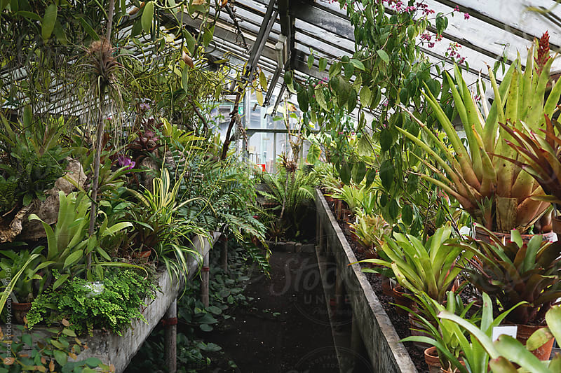 Greenhouse with exotic plants by Marcel for Stocksy United