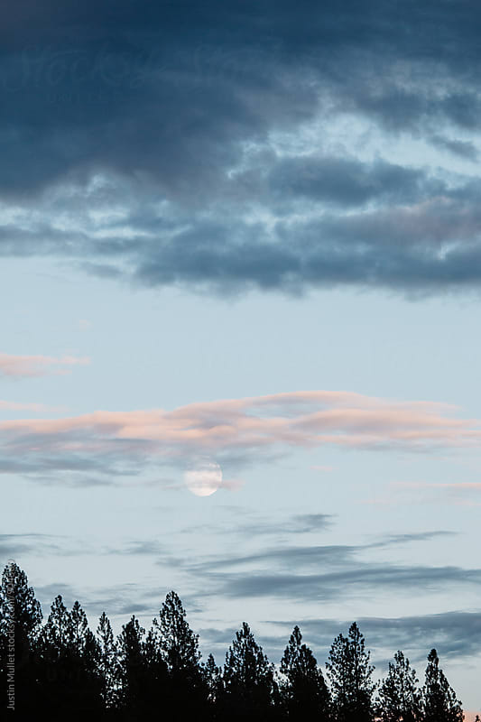 Nearly full moon rising over silhouetted pine trees by Justin Mullet for Stocksy United
