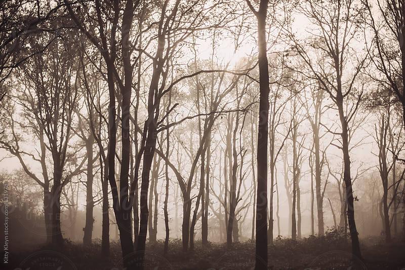 Misty woods by Kitty Kleyn for Stocksy United