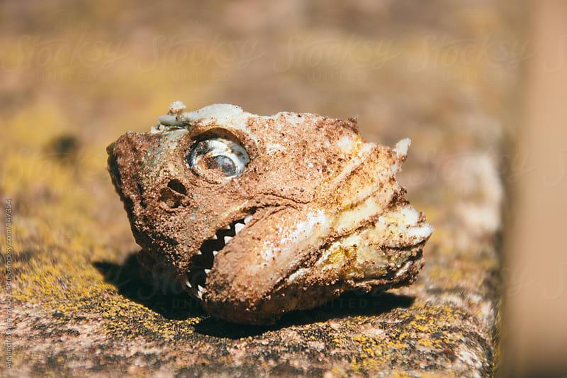 Dead fish head by Alejandro Moreno de Carlos for Stocksy United