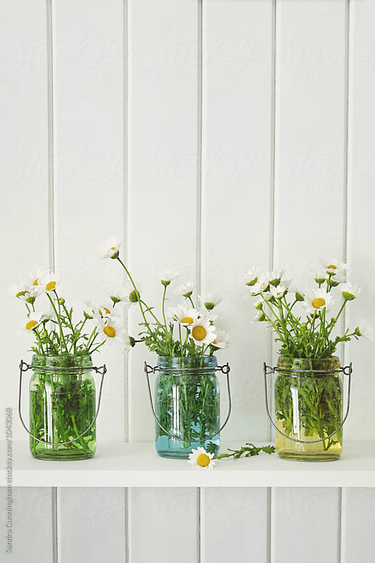 Jars filled with small white daisies by Sandra Cunningham for Stocksy United