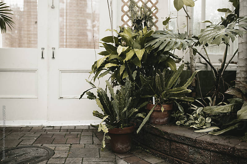 potted plants by white doors in greenhouse by Nicole Mason for Stocksy United