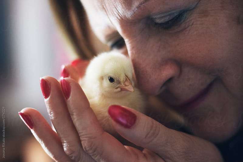 Mature woman holding baby chick by Jovana Rikalo for Stocksy United