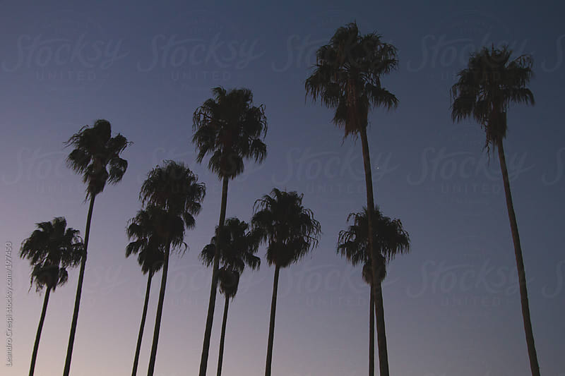 Group of palms on sunset by Leandro Crespi for Stocksy United