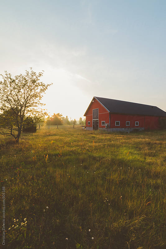a red barn on a meadow in sunset light by Christian Zielecki for Stocksy United