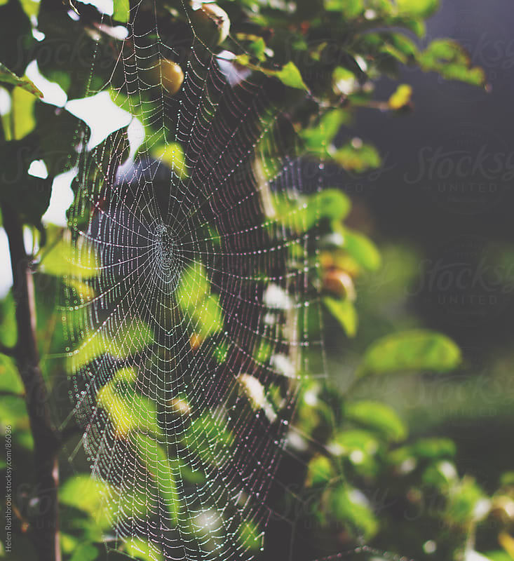 Cobwebs and Crab Apples - Autumn by Helen Rushbrook for Stocksy United
