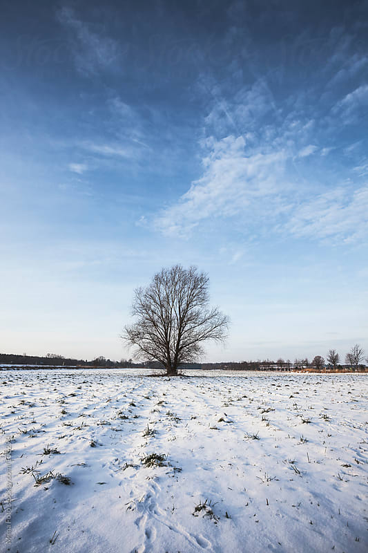 Lonely tree on snowy field by Mima Foto for Stocksy United