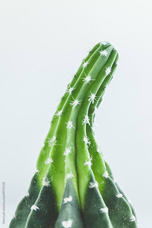 Cactus    by Vera Lair for Stocksy United