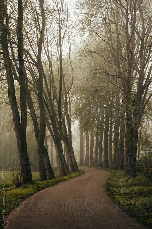 Chasing Fog by Robert-Paul Jansen for Stocksy United