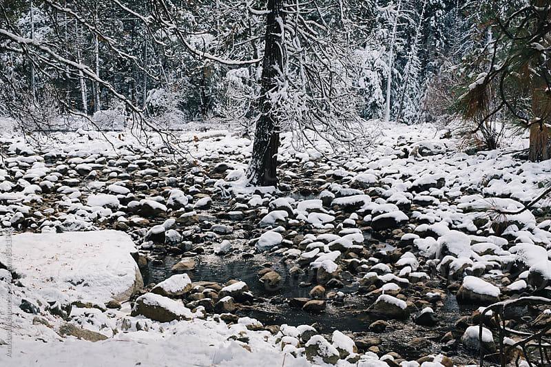 Yosemite by Anastasiia Sapon for Stocksy United