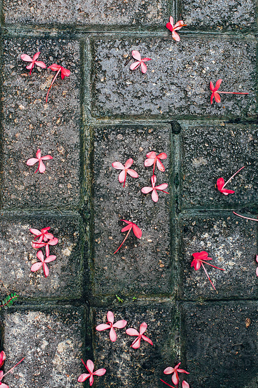 tiny pink flowers on wet bricks by Kelly Knox for Stocksy United