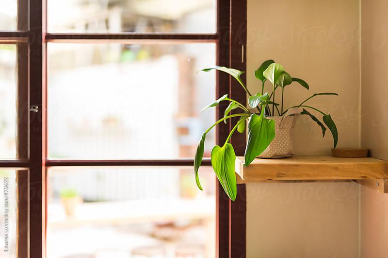 A cute small plant in white pot on shelf beside window by Lawren Lu for Stocksy United