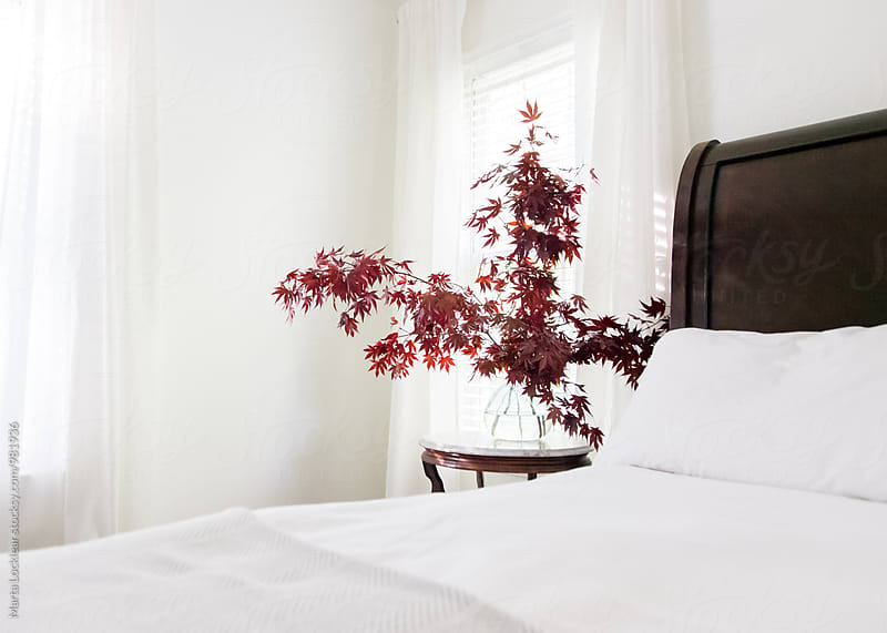 Maple Branches on a Bedside Table by Marta Locklear for Stocksy United