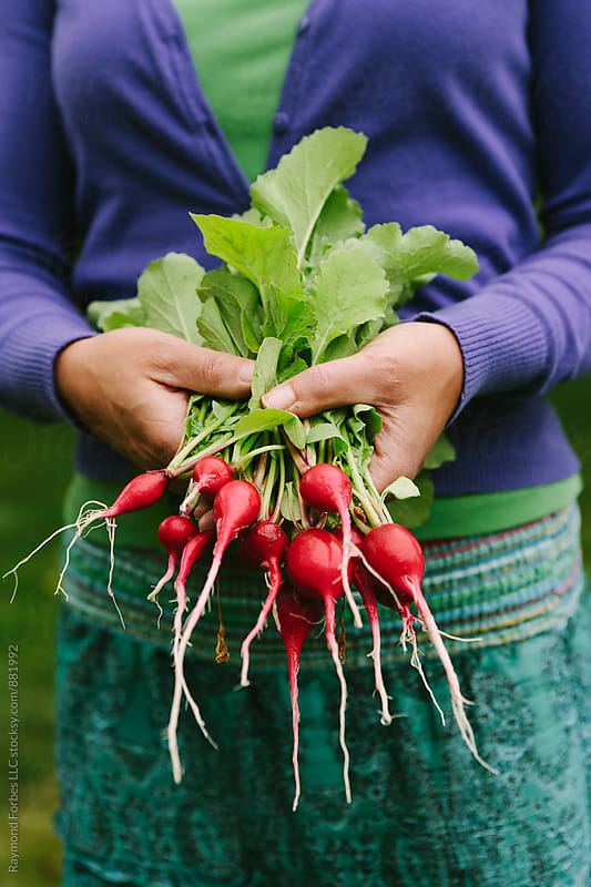 Backyard Farming for radish by Raymond Forbes LLC for Stocksy United