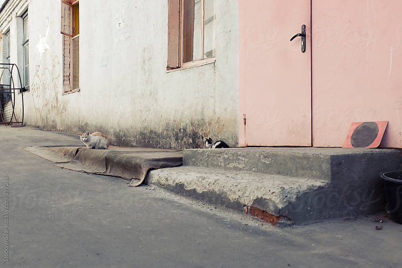 Moscow Alley Cats by StockvanSaar for Stocksy United