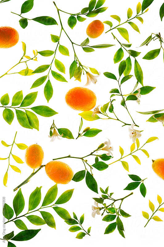 Kumquat by Alita Ong for Stocksy United