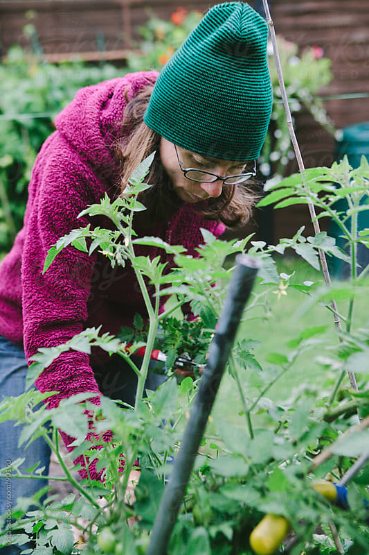 Gardener picking crops in vegetable garden by kkgas for Stocksy United
