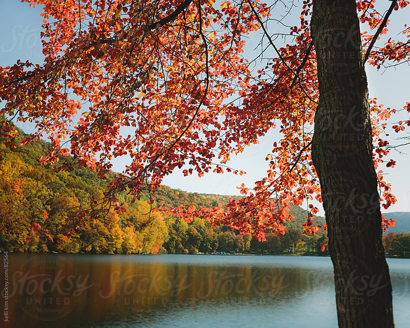 Tree With Vibrant Red Autumn Leaves With Lake In Background by kelli kim for Stocksy United