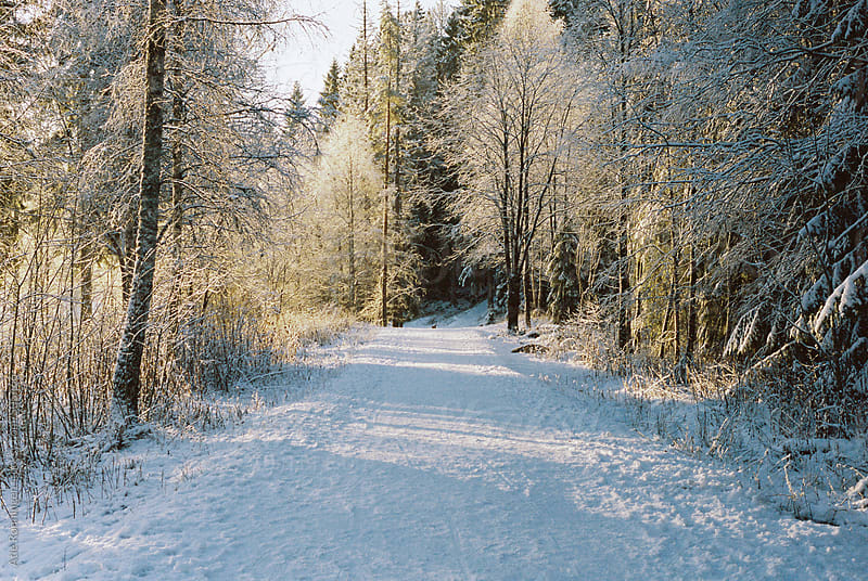 A leading straight path with the first snow a frosty morning in Oslo by Atle Rønningen for Stocksy United