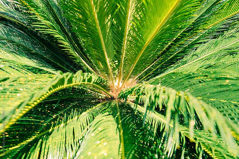 palm tree by Juri Pozzi for Stocksy United