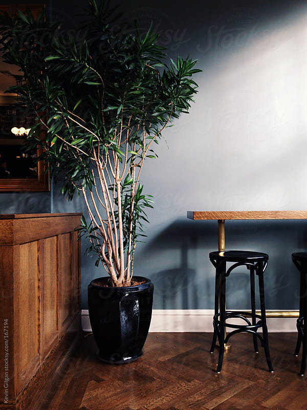Tree inside cafe by Kevin Gilgan for Stocksy United