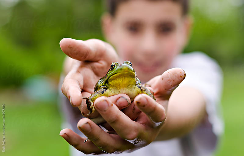 Boy Holding Frog by Rob Sylvan for Stocksy United