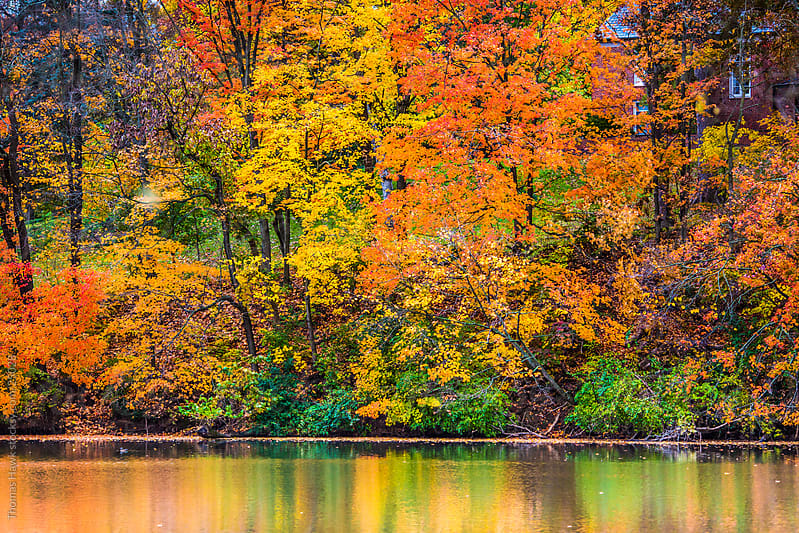 Fall Colors and Lake by Thomas Hawk for Stocksy United