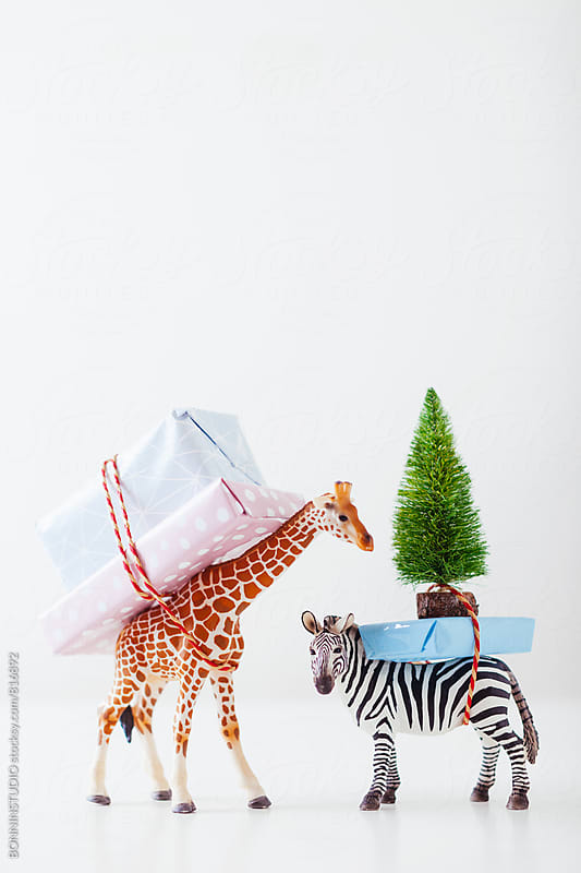 Toy giraffe and zebra carrying Christmas gifts on white. by BONNINSTUDIO for Stocksy United