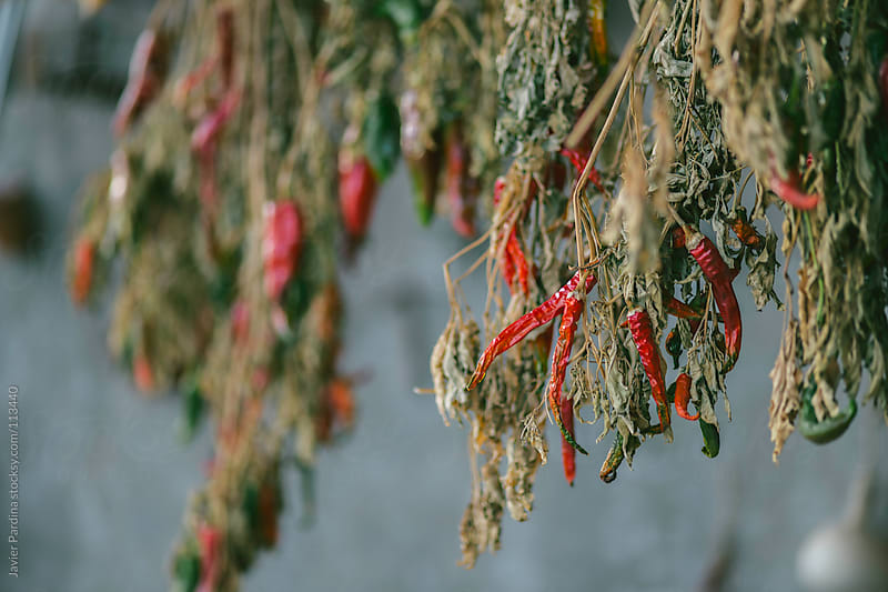 a fews natural chilli drying by Javier Pardina for Stocksy United
