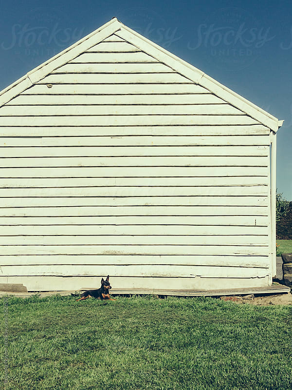 Small dog in front of old barn by Rowena Naylor for Stocksy United
