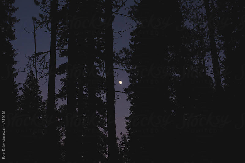 The Moon Rising at Dusk Through Dark Forest by Evan Dalen for Stocksy United