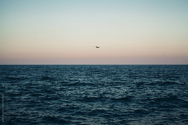 A bird flight over the sea by paff for Stocksy United