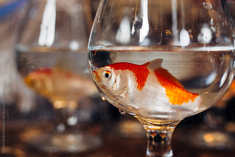 Goldfish in a wine glass by Gabriel (Gabi) Bucataru for Stocksy United