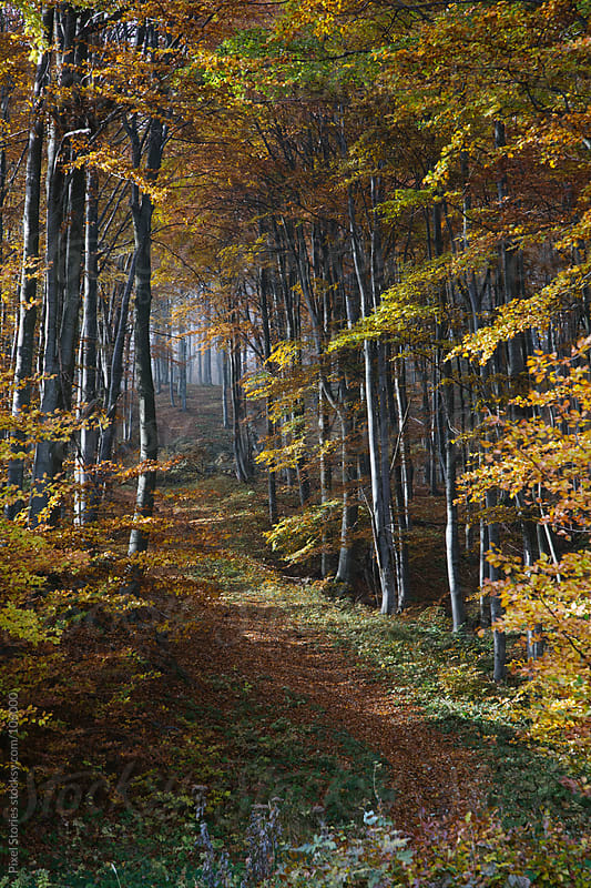 Autumn forest path by Pixel Stories for Stocksy United