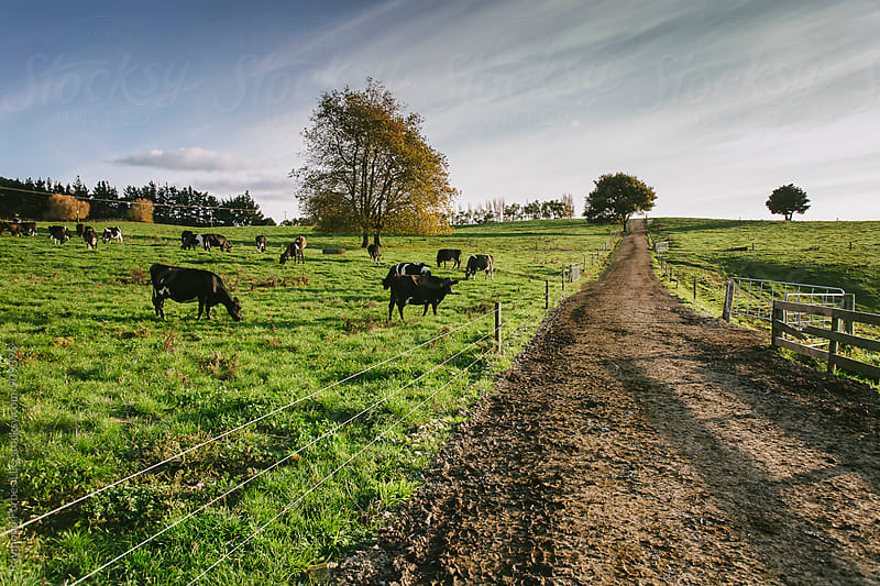 Rural Road South Island, New Zealand by Raymond Forbes LLC for Stocksy United
