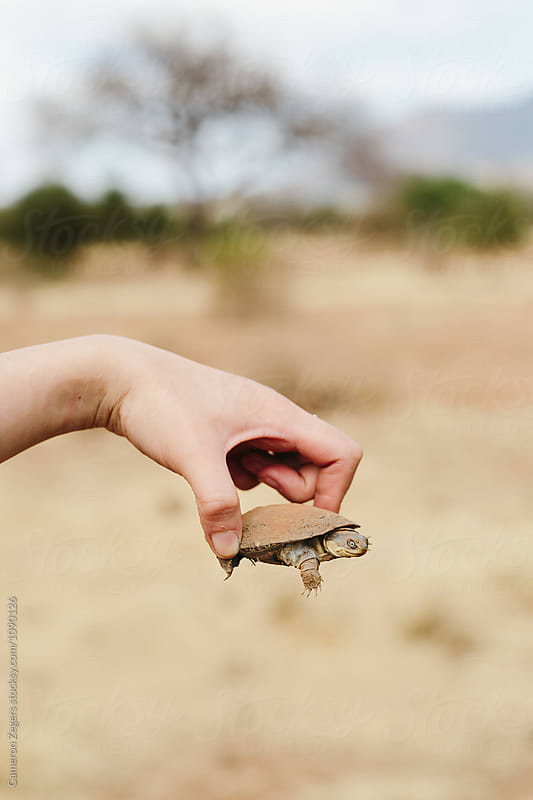 person holding turtle in Tanzania by Cameron Zegers for Stocksy United