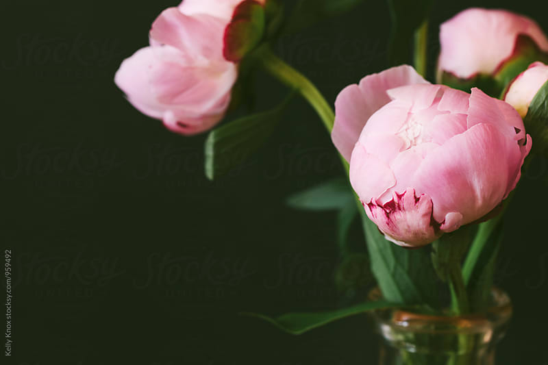 close up image of a bouquet of pink peonies by Kelly Knox for Stocksy United