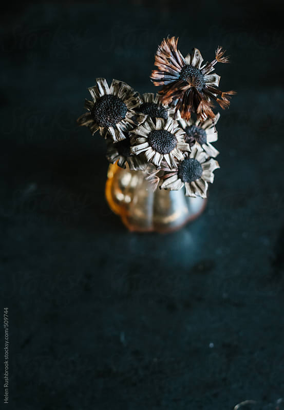 Small dried seedheads in a lustre vase on a dark background by Helen Rushbrook for Stocksy United
