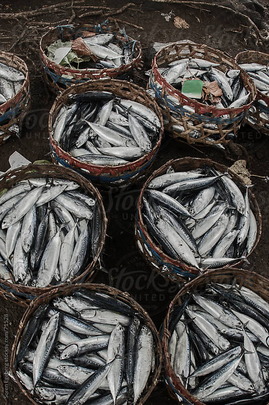 A Fishermans catch of fish in woven bamboo baskets in Bali. by Soren Egeberg for Stocksy United
